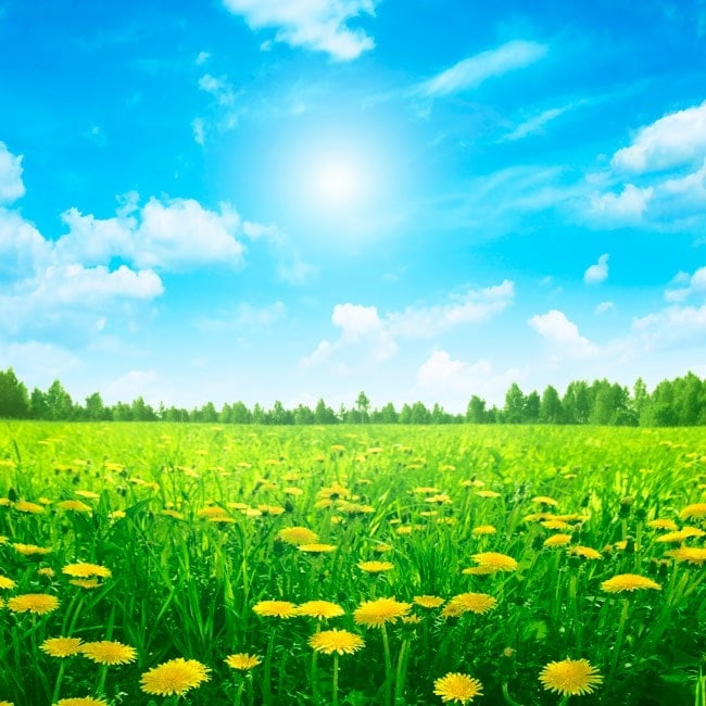 Fotomurales flores naturaleza for Fotomurales naturaleza
