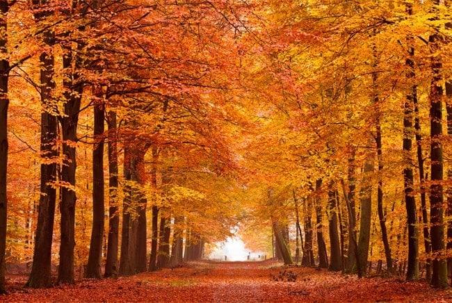 Fotomurales Camino Y árboles Otoño