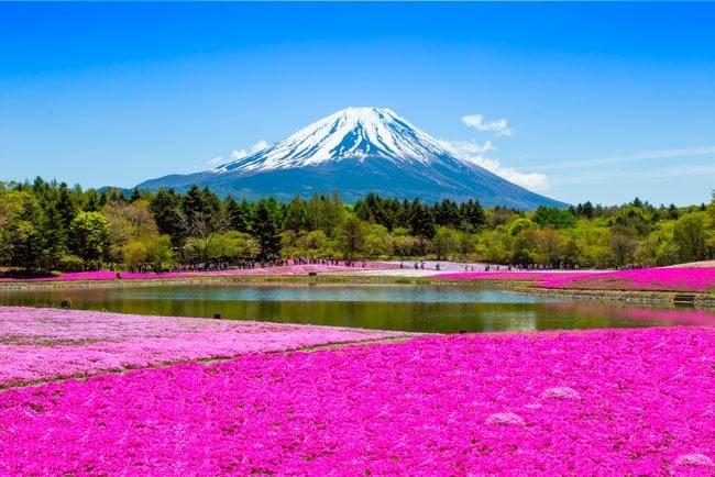 Imagenes De Jardines Con Flores: Fotomurales Jardines Flores Rosas Monte Fuji