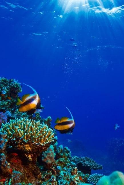 Vinilos para puertas peces en el mar for Pegatinas de peces