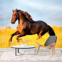 Fotomurales caballo en el campo