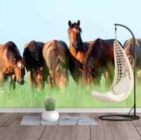 Fotomurales de vinilos caballos en el campo