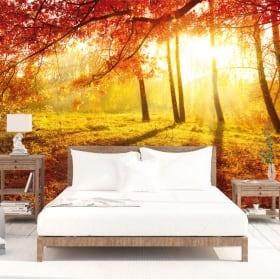 Fotomurales atardecer árboles otoño