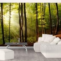 Fotomurales árboles bosque atardecer