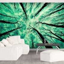 Fotomurales árboles bosque