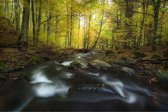 Fotomurales de vinilo r o naturaleza en oto o for Fotomurales naturaleza