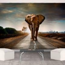 Fotomurales de vinilos elefante