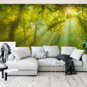 Fotomurales de vinilos rayos de sol en el bosque