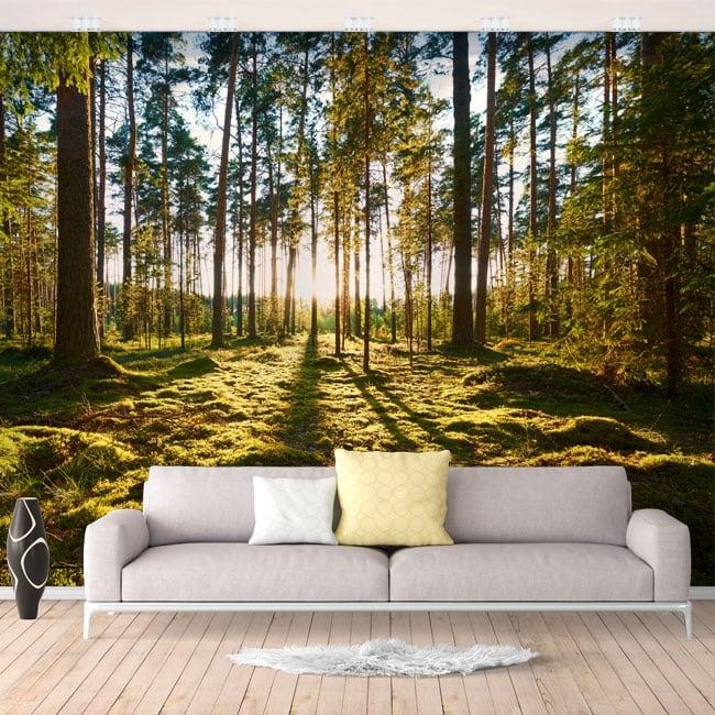 Fotomurales de vinilos atardecer en el bosque