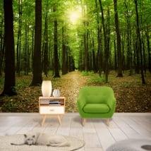 Fotomurales árboles en el bosque