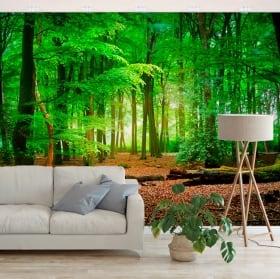 Murales de vinilos árboles en el bosque