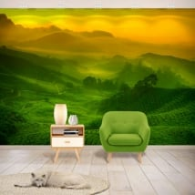 Fotomurales de vinilos plantación de té malasia