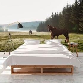 Fotomurales caballos en el campo